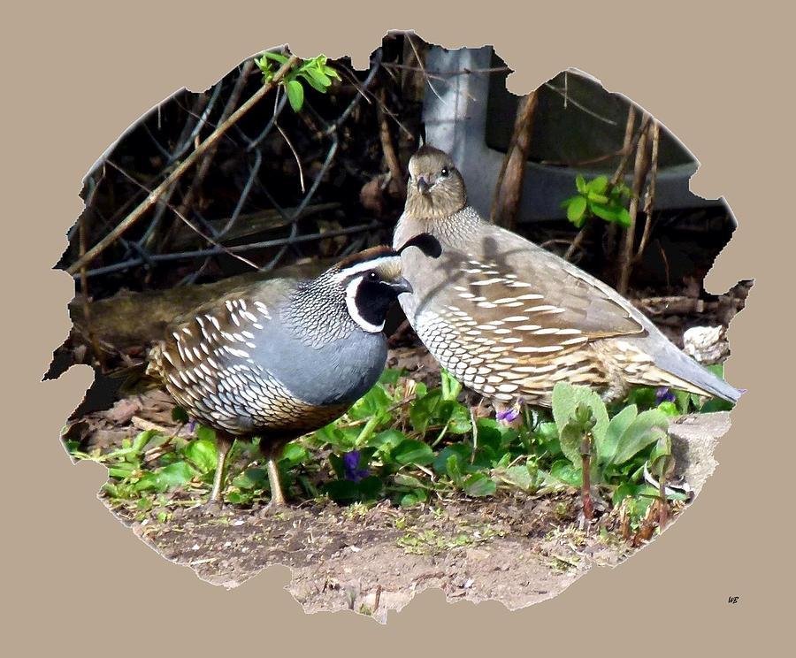 Birds Photograph - Quail Mates by Will Borden