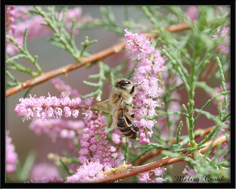 Denny Lake Photograph - Queen Bee by Melisa Crook