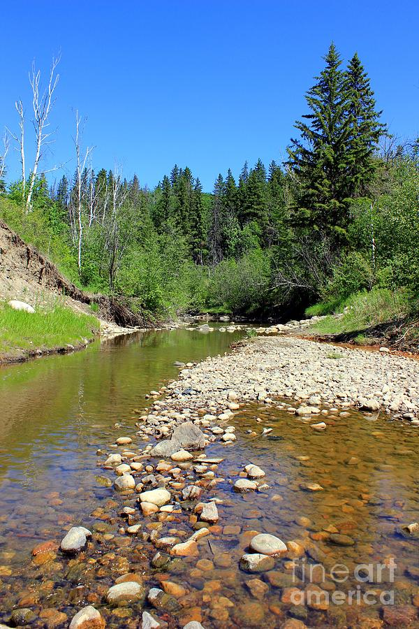 Rivers Photograph - Quiet Little Stream by Jim Sauchyn