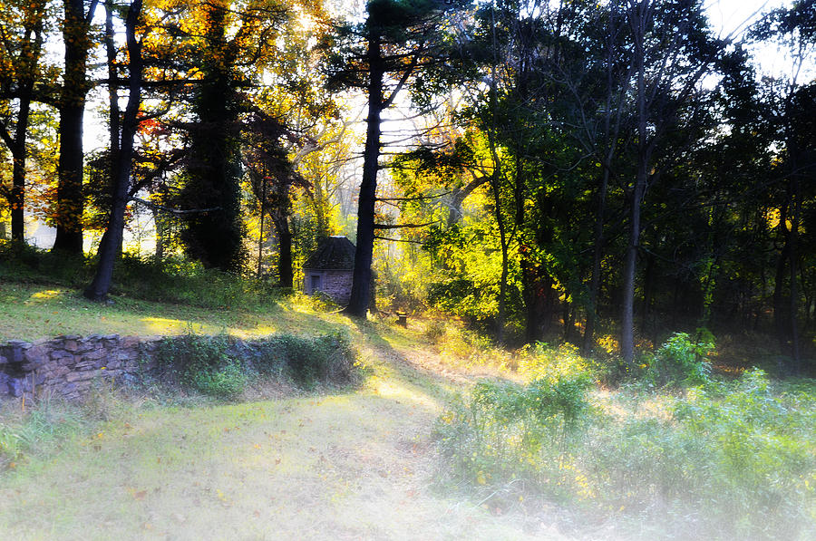 Morning Photograph - Quiet Morning In The Woods by Bill Cannon