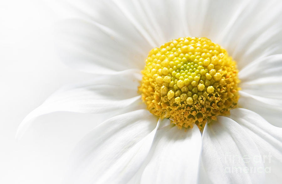 Flower Photograph - Quietly by Dan Holm
