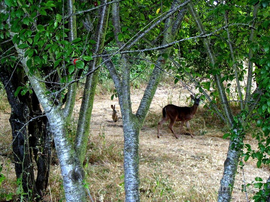 Post Card Photograph - Rabbit Spying On Buck In Velvet by The Kepharts