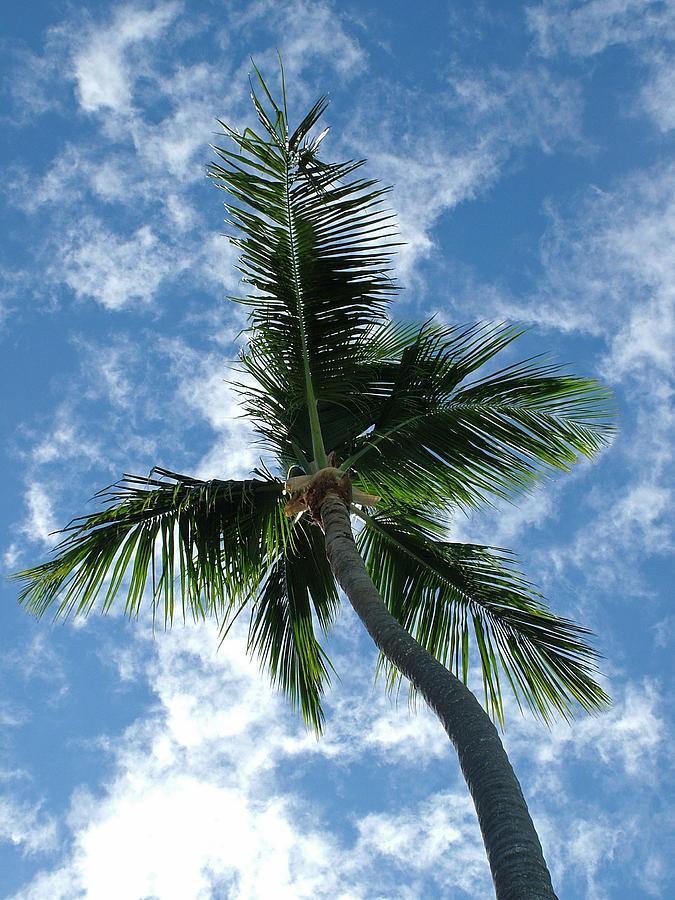 Palmtree Photograph - Raffia by Fredrik Ryden
