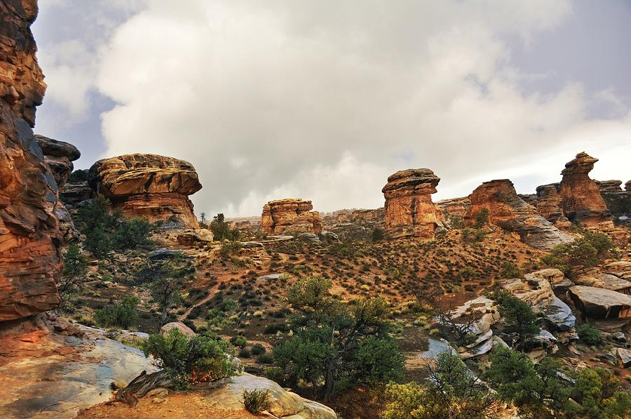 Canyonlands National Park Photograph - Rain At The Needles District by Marty Koch