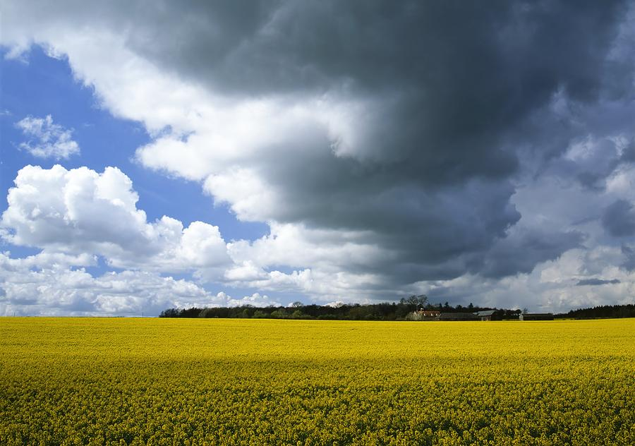 Oilseed Rape Photograph - Rain Clouds by Adrian Bicker