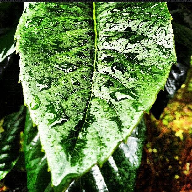 Leaf Photograph - Rain Drops by Lea Ward