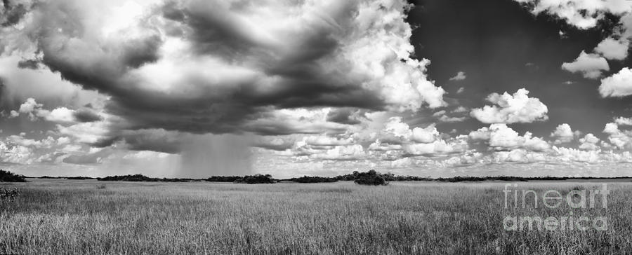 Black And White Photograph - Rain Everglades by Bruce Bain