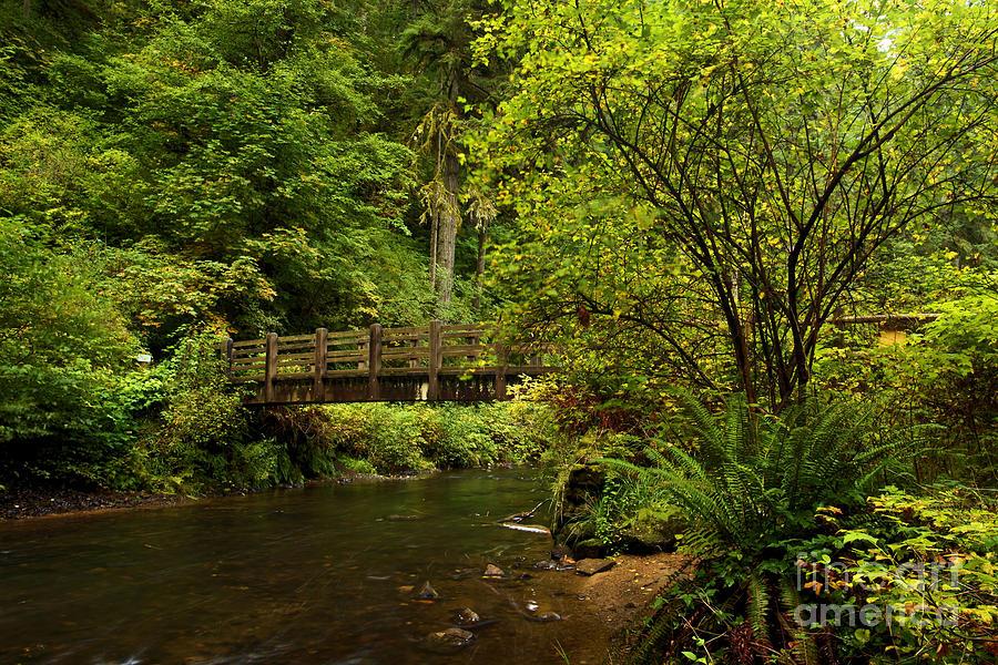 Silver Falls State Park Photograph - Rain Forest Bridge by Adam Jewell