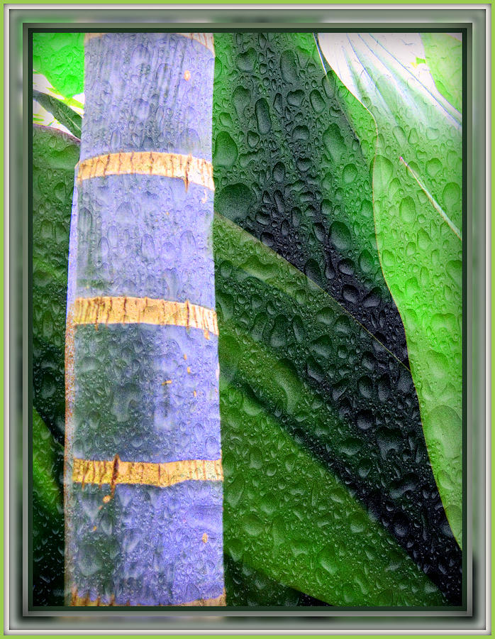 Palm Photograph - Rain Forest by Mindy Newman