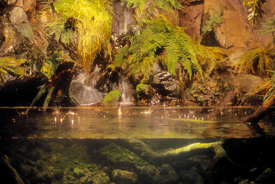 Baltimore Photograph - Rain Forest Pool by Mark Dodd