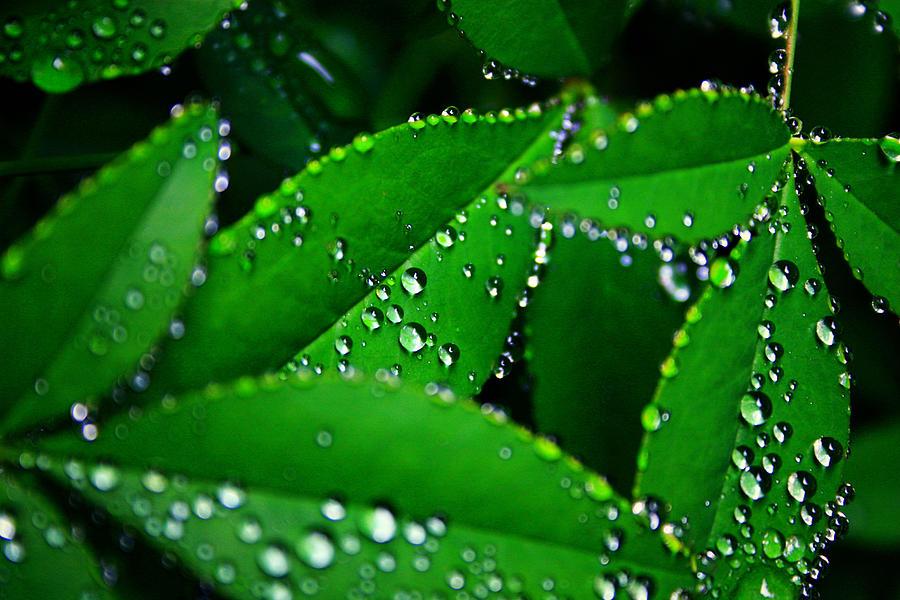 Nature Photograph - Rain Patterns by Toni Hopper
