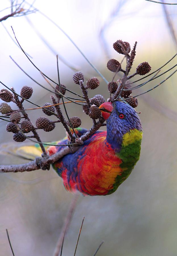 Rainbow Photograph - Rainbow At Play by Paul Svensen