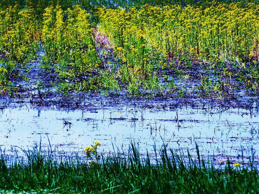 Flowers Photograph - Rainbow Field by Todd Sherlock