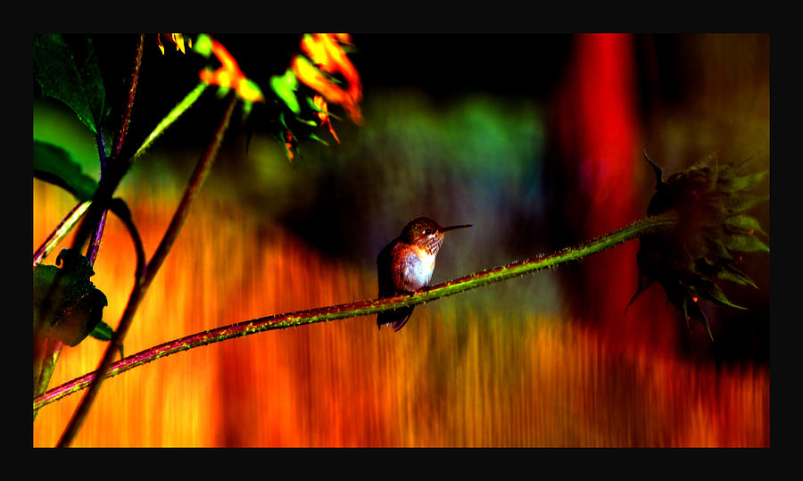 Hummingbird Photograph - Rainbow Gardens by Susanne Still