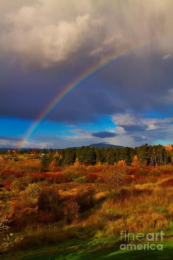 Rainbow Photograph - Rainbow Over Rithets Bog by Louise Heusinkveld