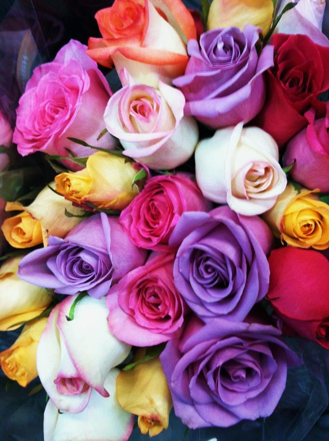 Roses Photograph - Rainbow Rose Bouquet by Anna Villarreal Garbis