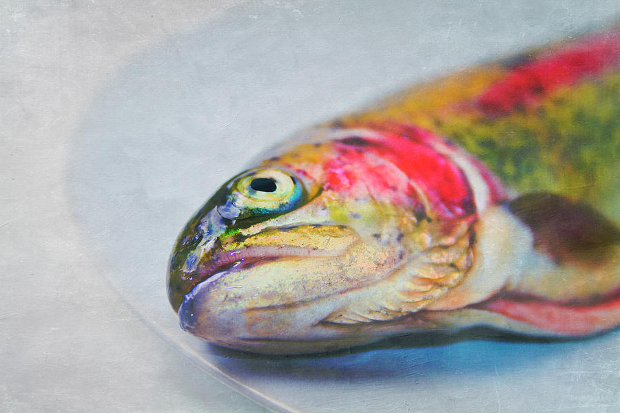 Horizontal Photograph - Rainbow Trout On Plate by Image by Catherine MacBride