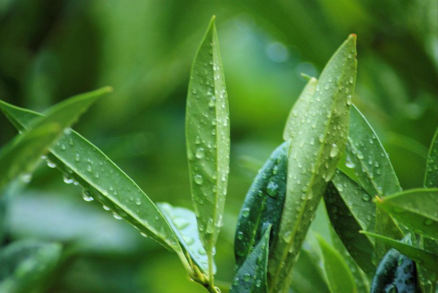 Rain Photograph - Raindrops by Michael Merry