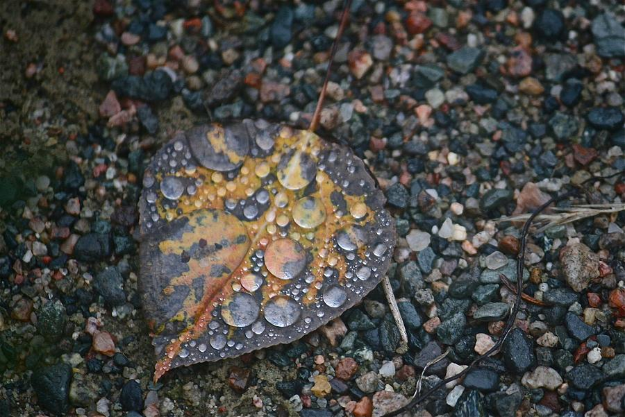 Leaf Photograph - Raindrops by Shirley Mailloux