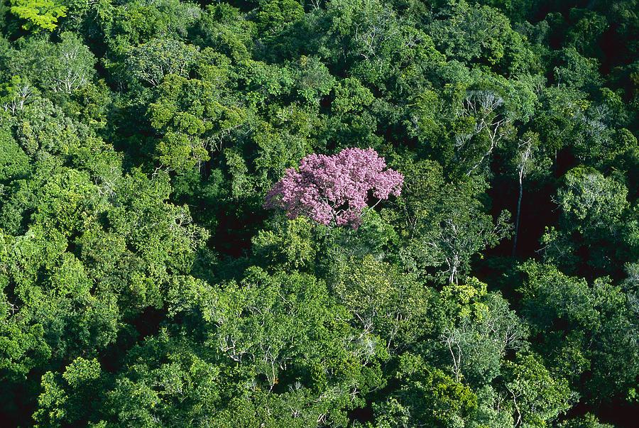 Rainforest Canopy Canaima NP Venezuela Photograph by Thomas Marent