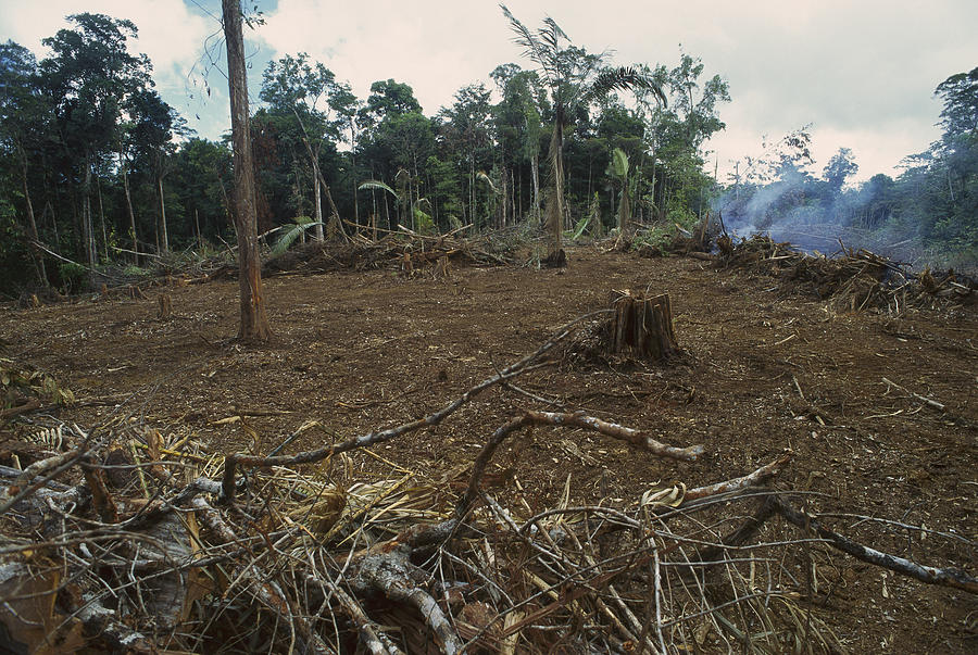 rainforest deforestation Causes of deforestation and forest degradation conversion of forests for other land uses, including pulp, palm, and soy plantations, pastures, settlements, roads and infrastructure forest fires: each year, fires burn millions of hectares of forest worldwide.