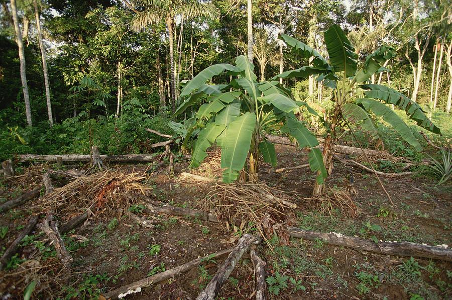 Mp Photograph - Rainforest Slash And Burn Destruction by Gerry Ellis