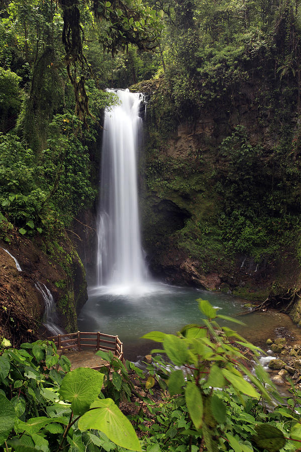 GPS Guide: Rainforest Scenes That'll Make You Feel ... |Tropical Rainforest Photography