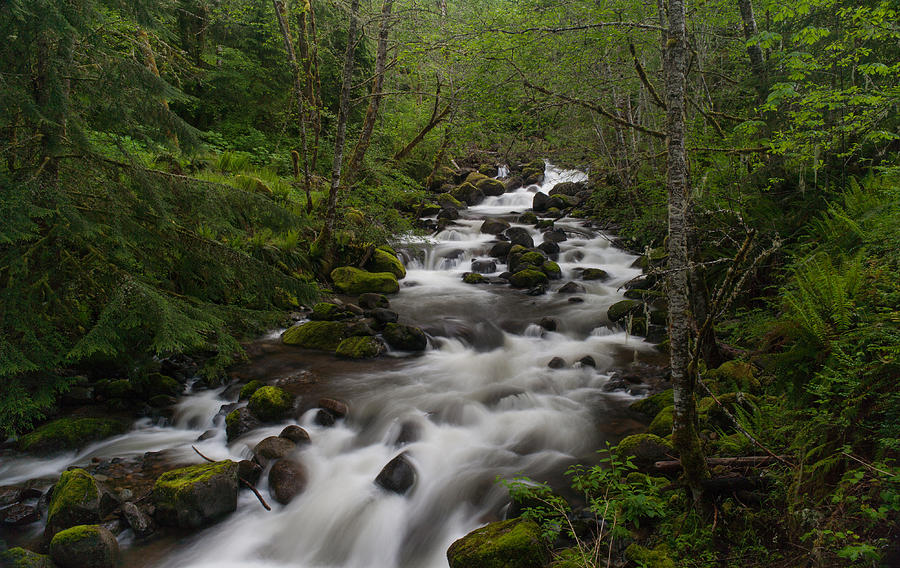 Forest Photograph - Rainier Forest Flow by Mike Reid
