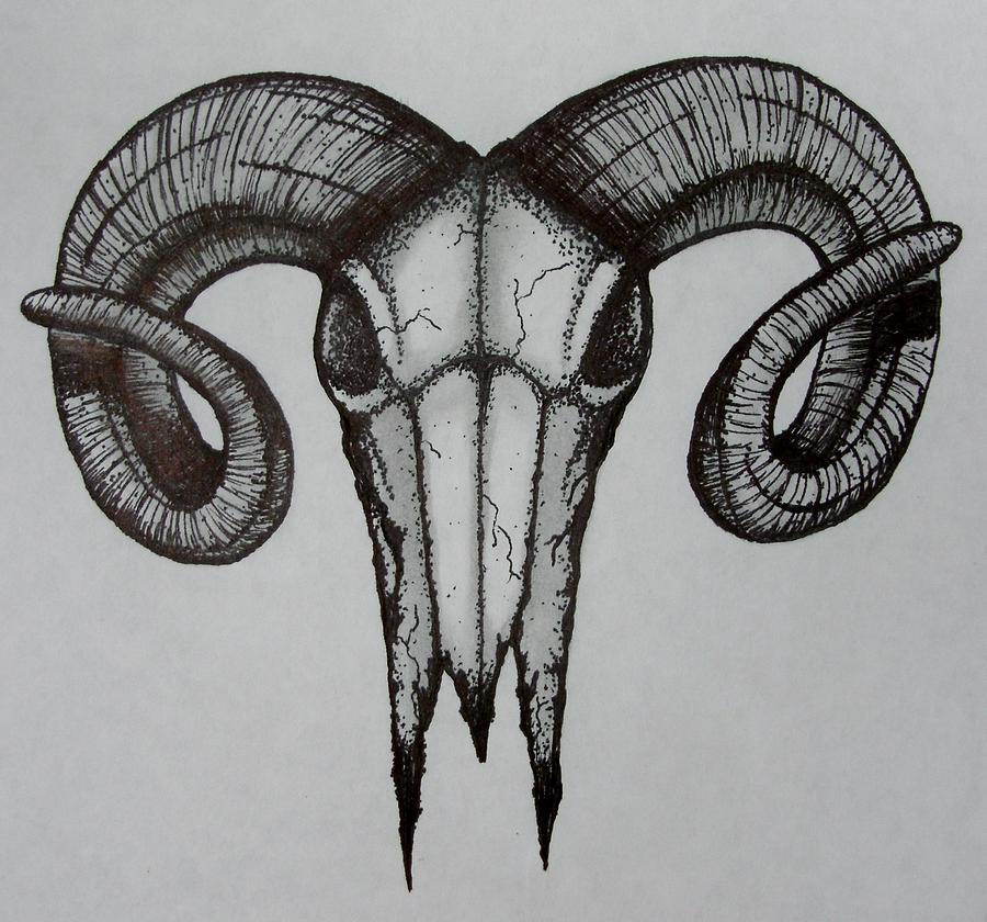 Bighorn Sheep Skull Drawing | www.pixshark.com - Images ...