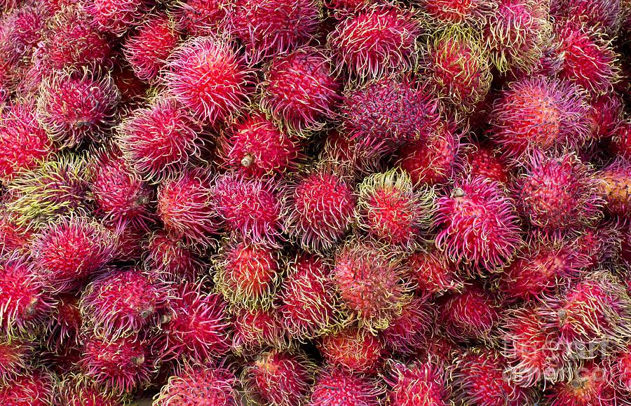 Ranbutan Southeast Asian Sweet Fruit Photograph - Ranbutan by Ed Rooney