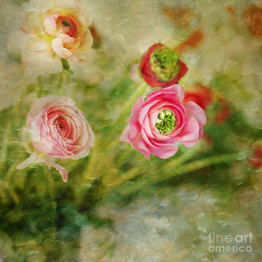 Vintage Photograph - Ranunculus Painterly by Susan Gary