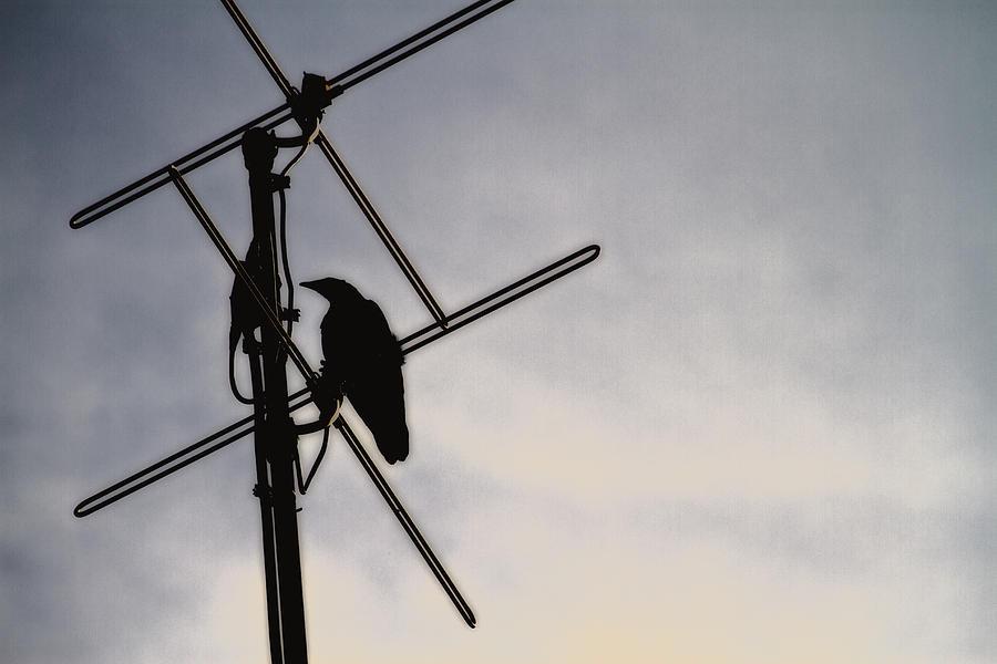 Raven Photograph - Ravens Perch by Karol Livote