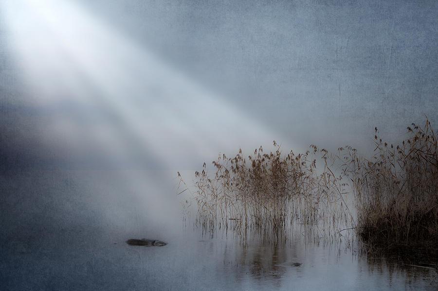 Reeds Photograph - Rays Of Light by Joana Kruse