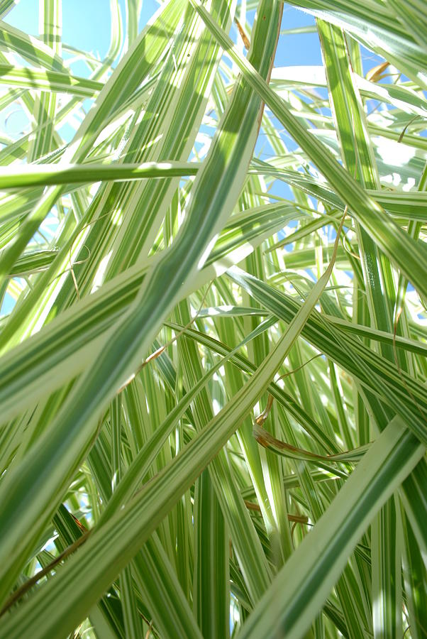 Grass Photograph - Reach For The Sky by
