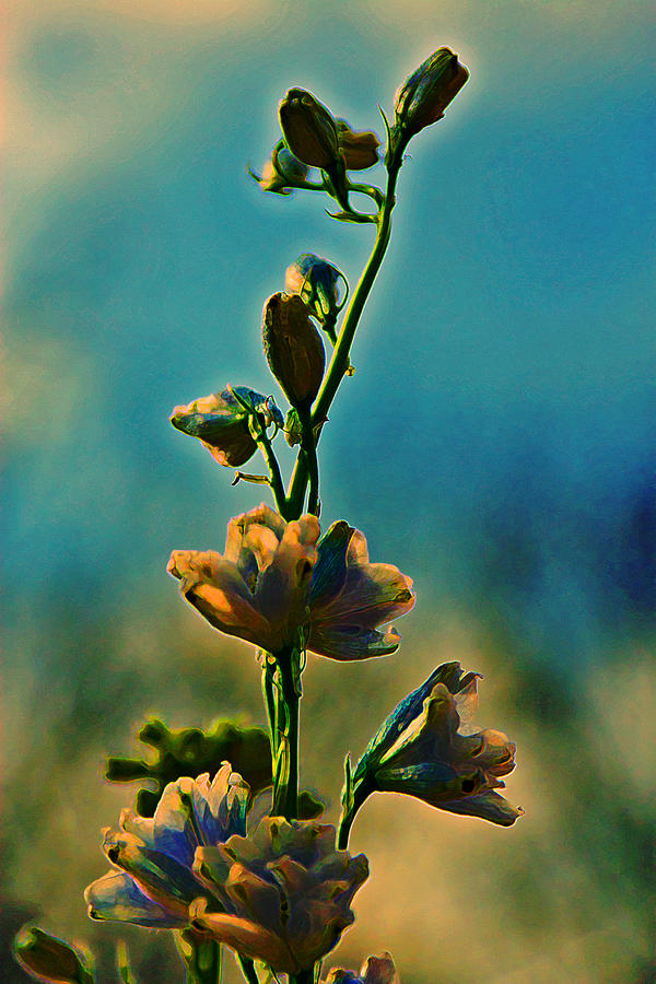 Flowers Photograph - Reaching Blooms by Bill Tiepelman