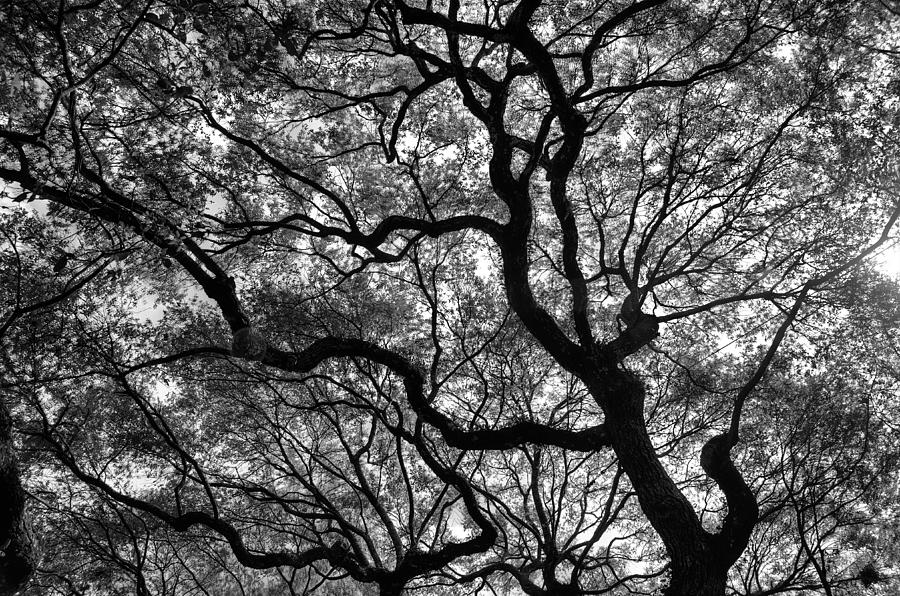 Charleston Photograph - Reaching To The Heavens by Andrew Crispi