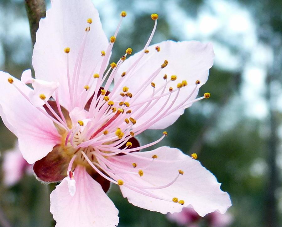Flower Photograph - Reaching Upward by Carla Parris