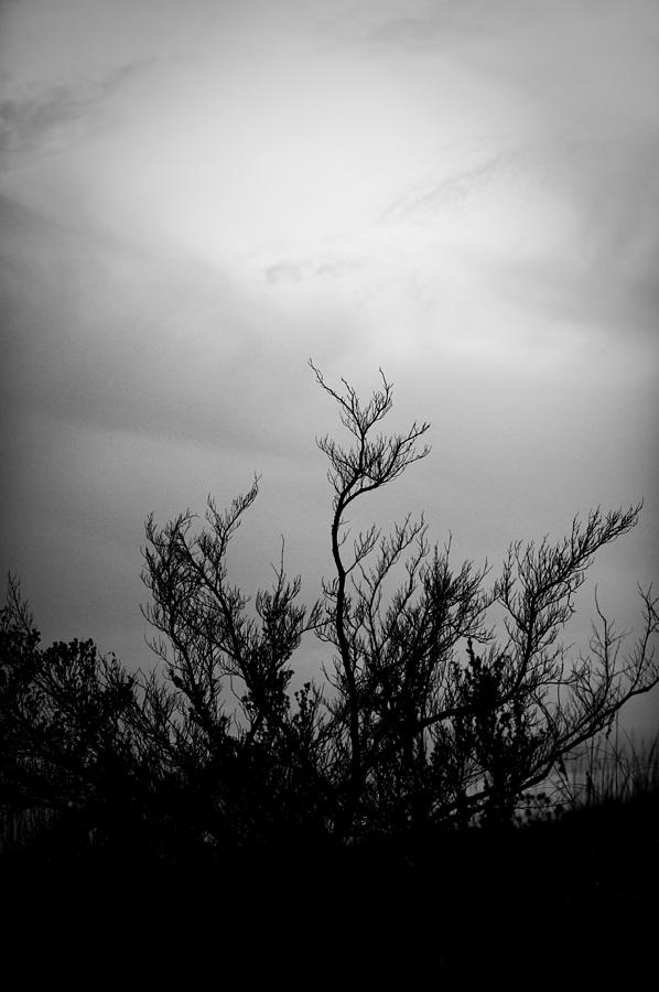 Tree Photograph - Reaching Upwards by Brandon McNabb