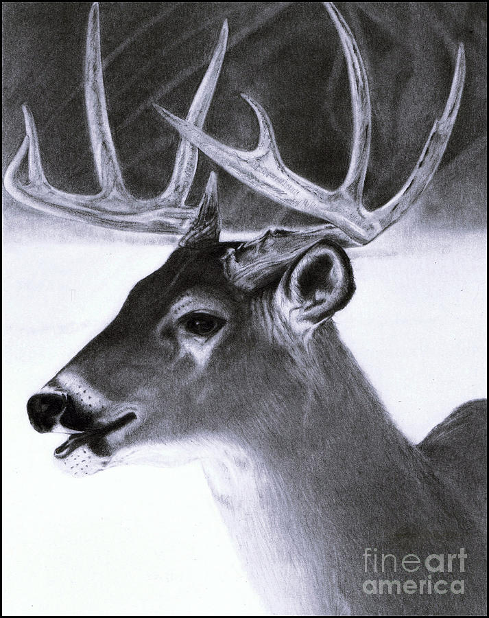 pencil drawings of animals - HD 812×1024