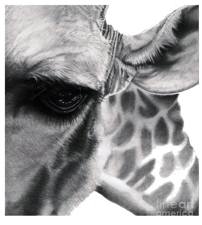 Realistic Pencil Drawing of a Giraffe Original Pencil Drawing Drawing by Debbie Engel