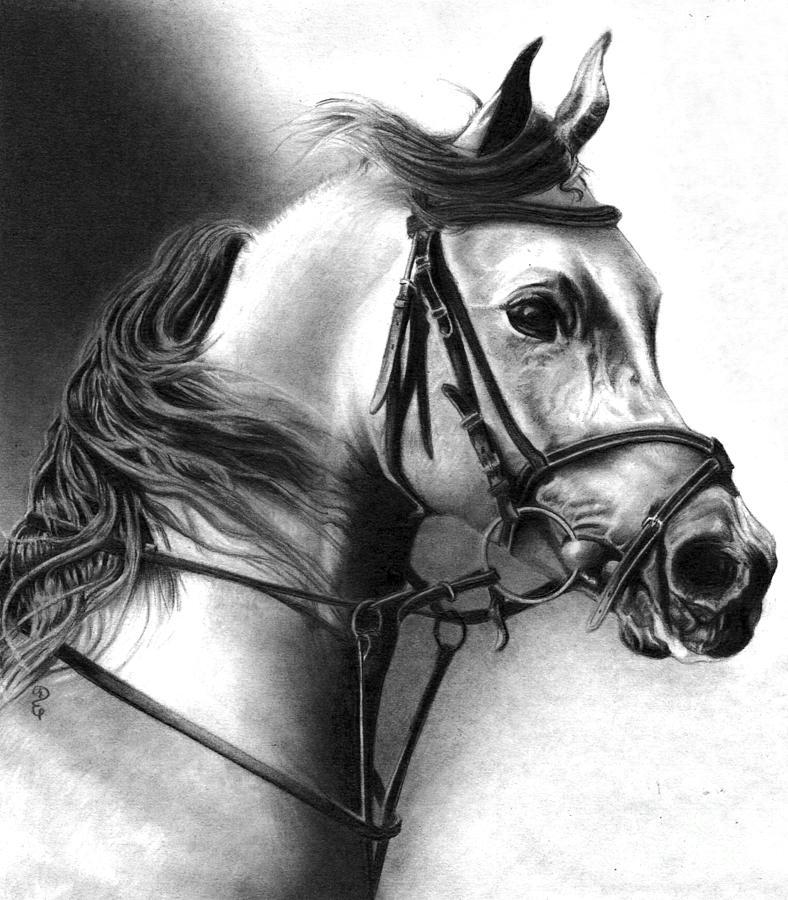 Realistic Pencil Drawing of a Lipizzan Stallion  by Debbie Engel