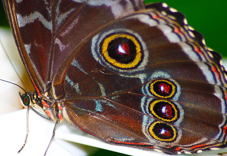 Hovind Photograph - Red And Yellow Eyes by Scott Hovind