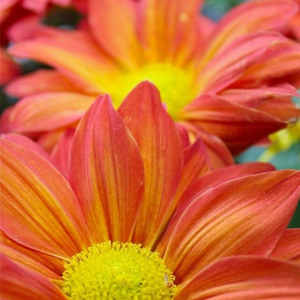 Flower Photograph - Red And Yellow Flowers   by Justin Connor