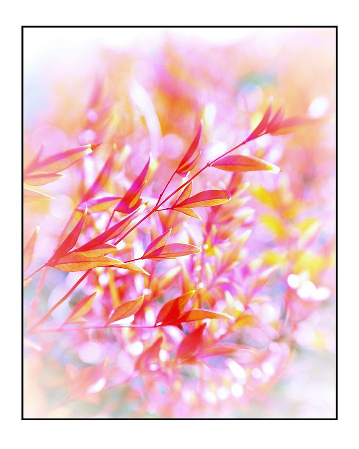 Shrub Photograph - Red And Yellow Leaves by Judi Bagwell