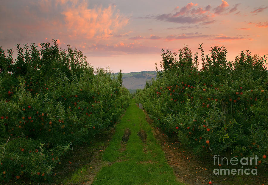 Apple Photograph - Red Apple Sunset by Mike  Dawson