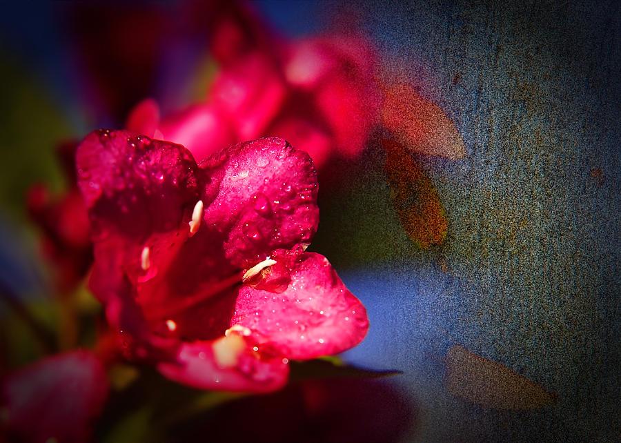 Red Macro Textured Flower Bambino Pyrography - Red Bambino by Gennadiy Golovskoy