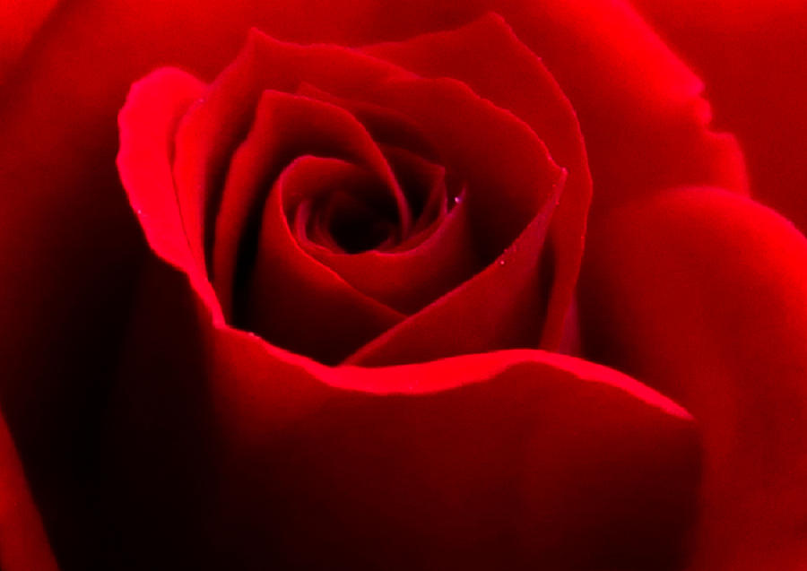 Red Photograph - Red Beauty by Rebecca Frank