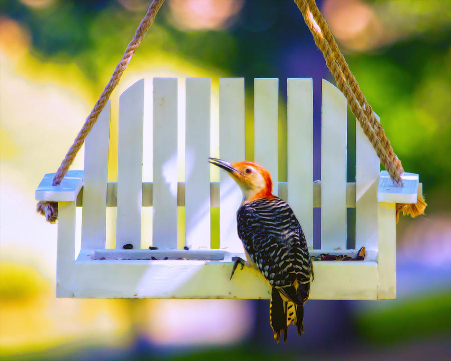 Red-bellied Woodpecker Photograph - Red-belly Comes For Lunch by Bill Tiepelman