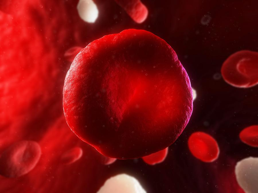 Artwork Photograph - Red Blood Cell, Artwork by Sciepro