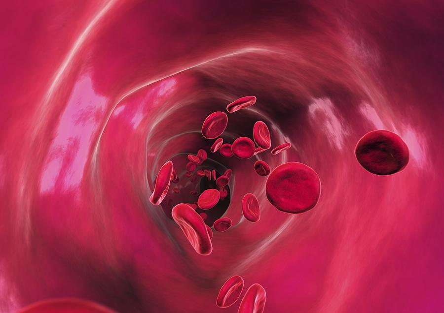Red Blood Cell Photograph - Red Blood Cells In Blood Vessel, Artwork by David Mack